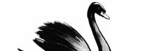 Jezero černých labutí